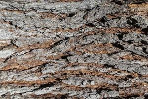 struttura in legno tronco d'albero marrone foto
