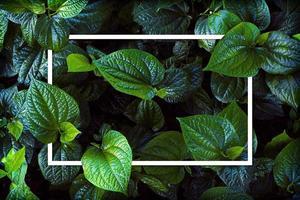 cornice bianca su sfondo verde foglia, il testo può essere scritto, foglie verdi lussureggianti naturali di sfondo texture foglia. foto