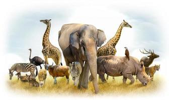 safari africano e animali asiatici nell'illustrazione del tema, pieno di molti animali, un'immagine di bordo bianco foto