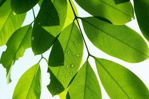 acqua in congedo sfondo, foglia verde natura foto
