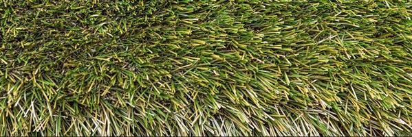 sfondo da erba verde primaverile foto