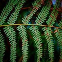foglie di felce verde nella stagione primaverile foto