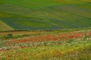 castelluccio di norcia e la sua natura fiorita foto
