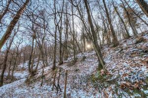 foresta che circonda zavattarello, nord italia foto