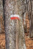 segnavia per un sentiero nel bosco foto
