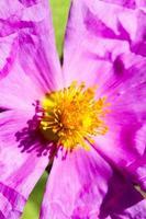 fiore macro fluorescente foto