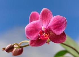 primo piano di un fiore di orchidea foto