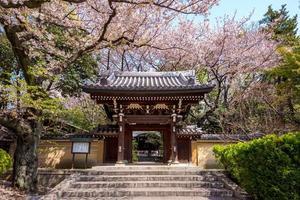 tempio homyoji con fiori di ciliegio a tokyo foto