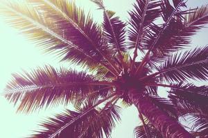 albero di cocco foto