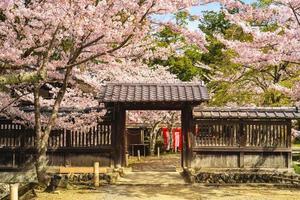 tempio daikaku ji con fiori di ciliegio ad arashiyama a kyoto, giappone foto