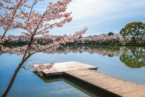 stagno di osawa con fiori di ciliegio ad arashiyama a kyoto, in giappone foto
