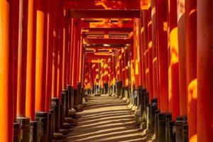 senbon torii path in fushimi inari taisha, kyoto, giappone foto