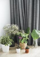 diverse piante da appartamento sul pavimento foto