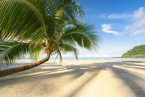 bellissima spiaggia tropicale e mare con palme da cocco sotto il cielo blu foto