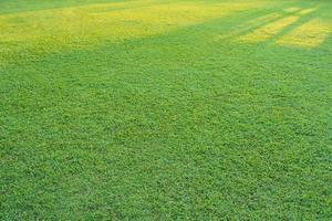 erba verde con la luce del sole nel parco foto