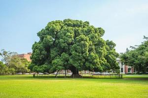 parco banyan dell'università nazionale di cheng kung a tainan, taiwan foto