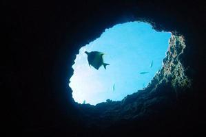 sagoma di pesce singolo in un buco foto
