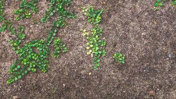 la piantina stanno crescendo. concetto di ecologia. salva lo sfondo dell'idea del mondo foto