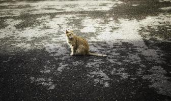 gatto randagio in città foto
