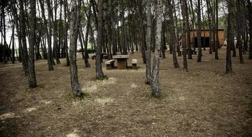foresta con alberi foto