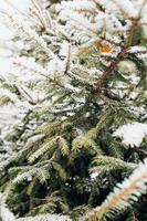 foresta di conifere sotto la neve - bufera di neve nella foresta invernale foto