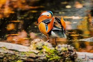 primo piano di uccelli selvatici wild foto