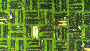 trama di vecchi mattoni con muschio verde foto