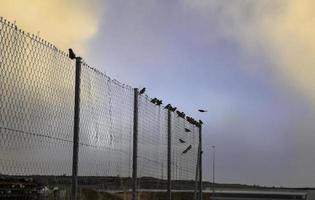 recinzione metallica con uccelli foto