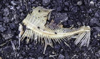 raschiatura di pesce foto
