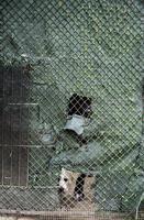 cane in canile foto