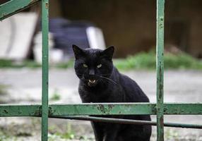 gatto nero per strada foto
