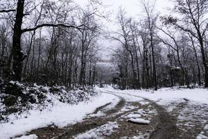 bosco innevato naturale natural foto
