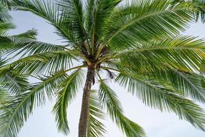 sfondo della stagione estiva di un albero di palma da cocco foto