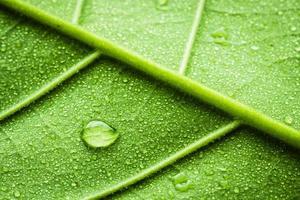 struttura delle foglie con rugiada foto