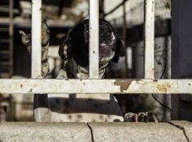 cane da caccia abbandonato foto