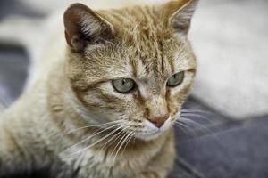gatto arancione che riposa strada foto