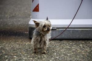 yorkshire aspetta la strada foto