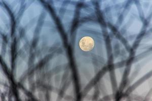 luna piena brasiliana. foto