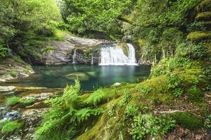 cascata in mezzo alla foresta foto