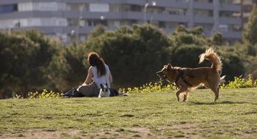 un cane che si diverte con la sua palla nel parco di madrid rio, madrid spagna foto