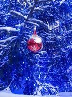 abete blu nevoso con una ghirlanda di luci e una palla rossa a forma di babbo natale foto
