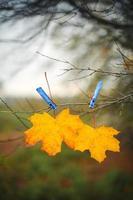 foglia d'acero autunnale gialla e molletta da bucato blu sul ramo di un albero con sfondo cielo e campo verde. immagine atmosferica della stagione autunnale. bellissimo sfondo autunnale. concetto di tempo di caduta. messa a fuoco selettiva. foto
