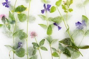 fiori congelati nel ghiaccio, fiori blu, sfondo decorativo foto