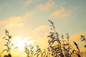 erba di campo contro il cielo arancione all'alba, paesaggio con cielo mattutino estivo foto