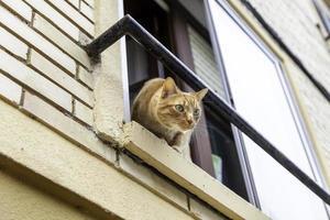 gatto arancione che sbircia dalla finestra foto