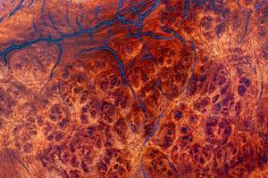 radica di amboyna rigata foto