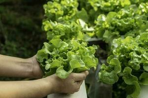 il giovane agricoltore tiene in mano una quercia verde vegetale foto
