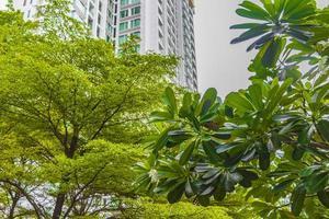 pioggia e tempesta su alberi piante grattacieli a bangkok in thailandia. foto