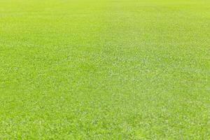 priorità bassa di struttura dell'erba verde foto