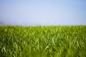campo di erba verde e cielo foto